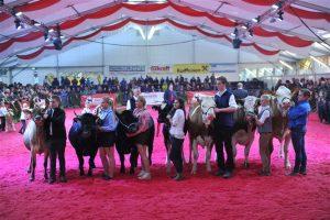 Die Sieger beim Jungzüchterwettbewerb (Foto: Holzhammer)